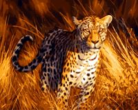 Latest Style Unframed Leopard Animals Diy Oil Painting By Numbers Acrylic Wall Art Canvas Painting Home
