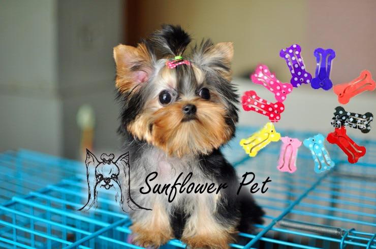 2.5CM Bone Design Dog Mini BB Hair Clip Pet Hair Accessories Teddy Yorkshire Hairpin Grooming  5pcs /lot