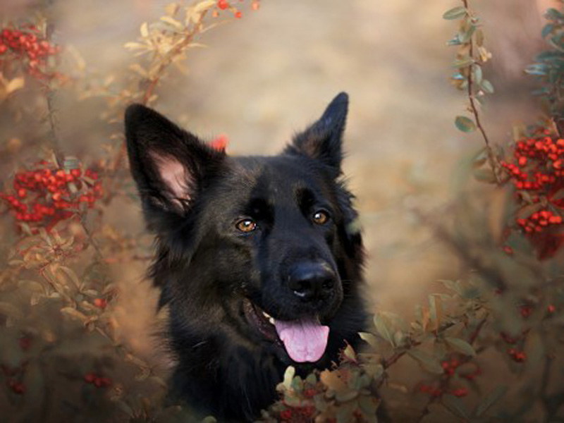 Black dog in flowers 450x340 - WallpapersEveryDay.com