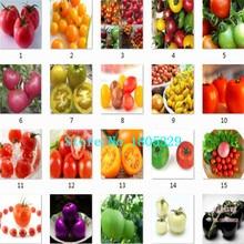 Фамильные номера гмо лед белый помидоры черри семена 100 семена овощных культур