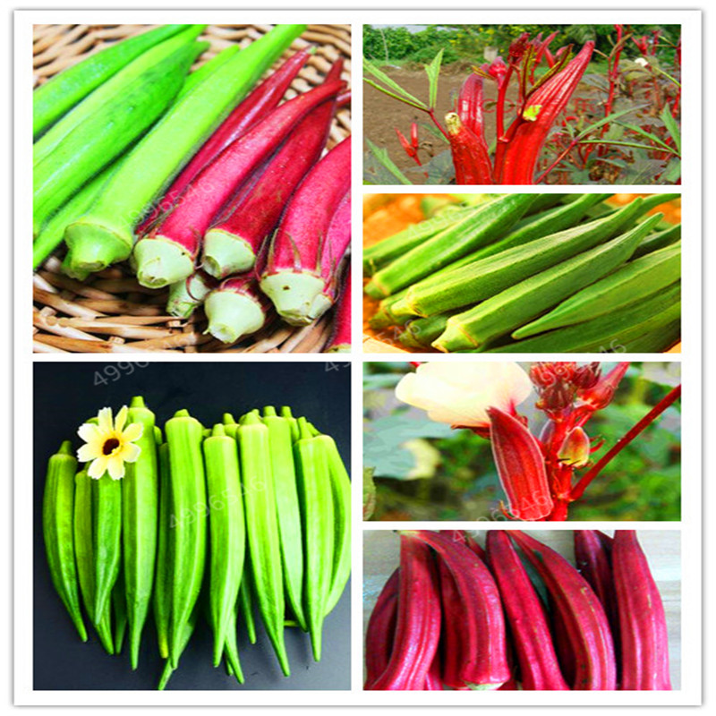 20Pcs Potted Spring Sowing Bonsai Terrace Vegetables View Fruit Okra Kidney Bonsai Claw Vegetables