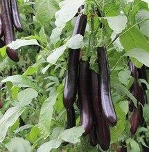 Dai platinum Seoul green to eggplant seeds nutrition vegetable seed 100seed