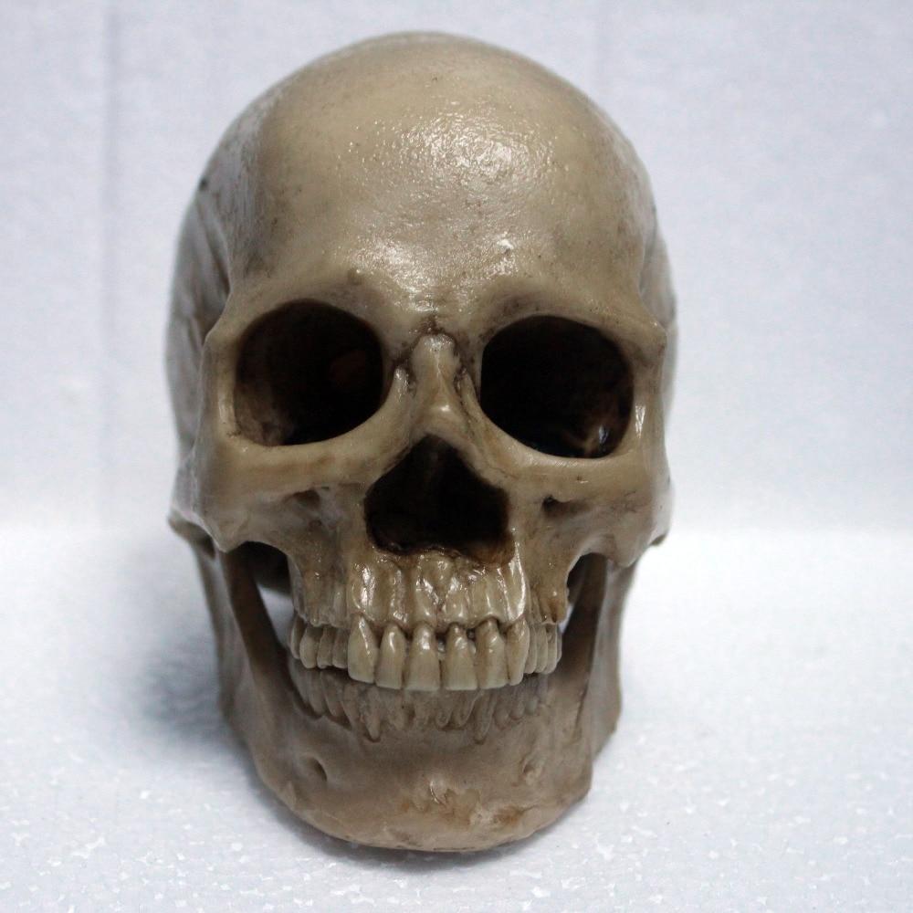 life size Human anatomy skull brain skeleton anatomical dental ...