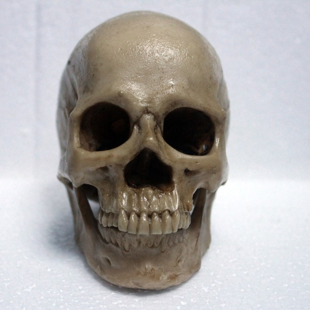 13 Small Size Painting High Level Resin Material Human Skull