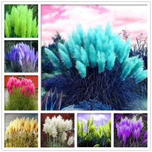 200 Pcs Pampas Grass plantas Patio And Garden Potted Ornamental Plants New Flowers (pink Yellow White Purple) Cortaderia Grasses(China)