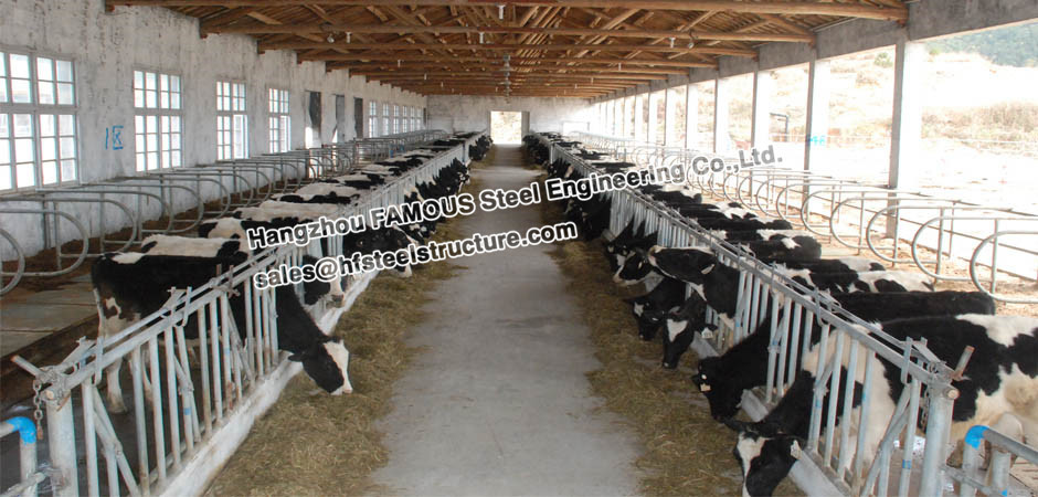 Hot Sale Steel Structural Poultry Shed