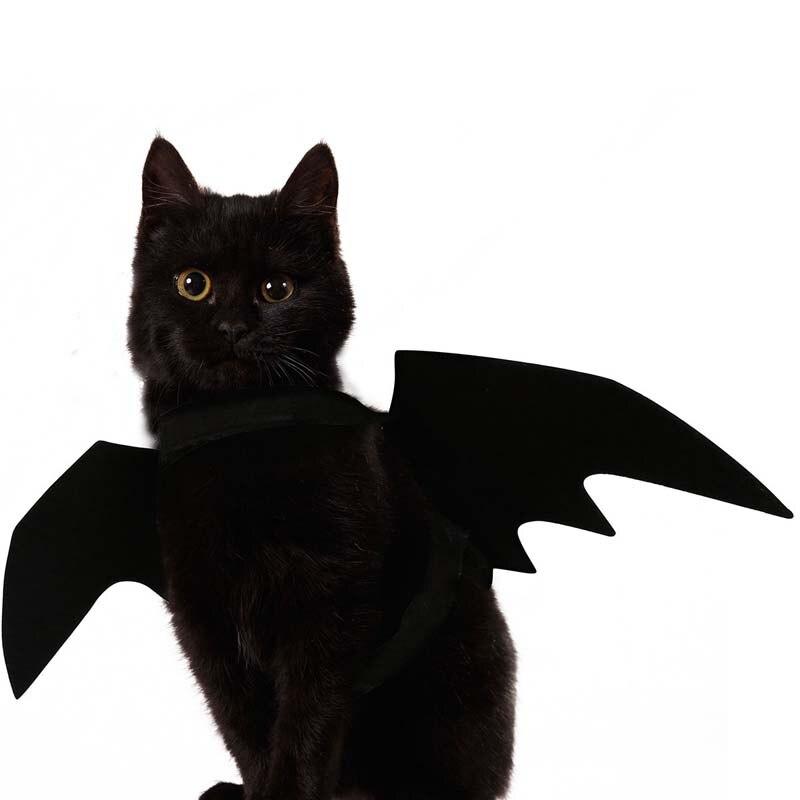 Cat Dog Black Bat Wings Puppy Kitten