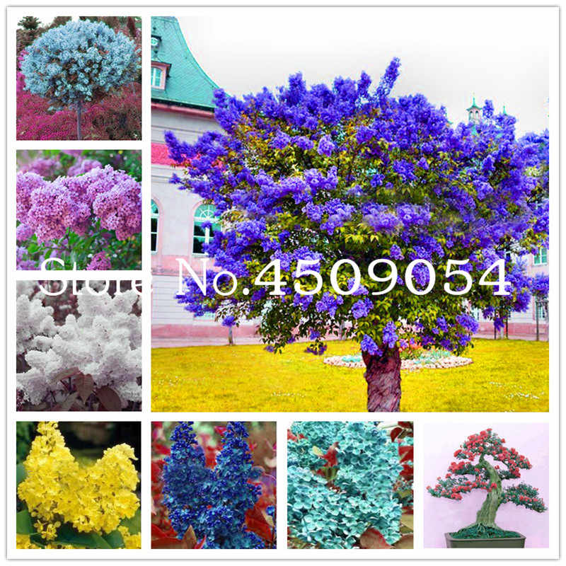 Free Shipping Bonsai 100 Pcs Japanese Lilac plant indor plants Lilac Clove Flower potted plant For Home Semillas Garden Supplies