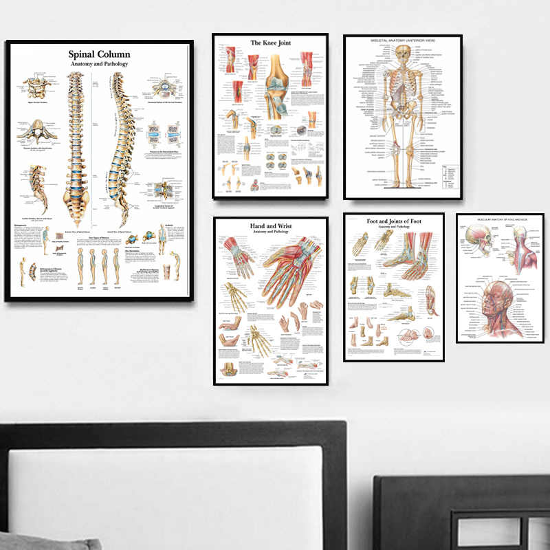 Poster And Prints Anatomy Human Body Medical Spinal Column Knee Joint Foot Painting Art Wall Pictures For Living Room Home Decor