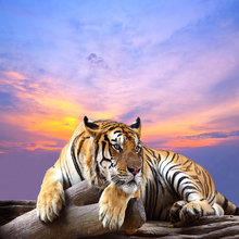 Tiger Wallpapers 3D Large Mural