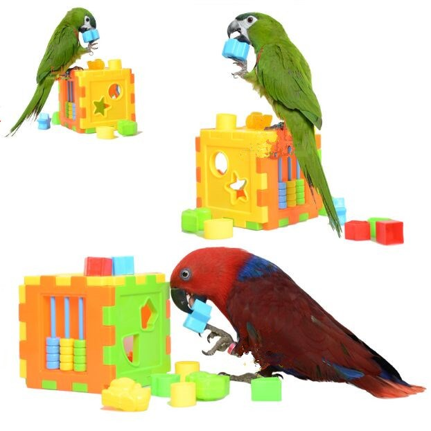 Parakeet Toys And Accessories : Parrot toy supplies wow