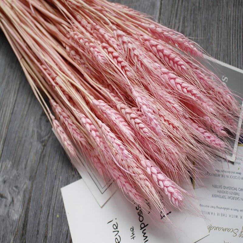 50 unids/Bunch nuevas decoraciones caseras ramo Natural trigo flores secas arte caliente Shooting Props decoración del partido DIY