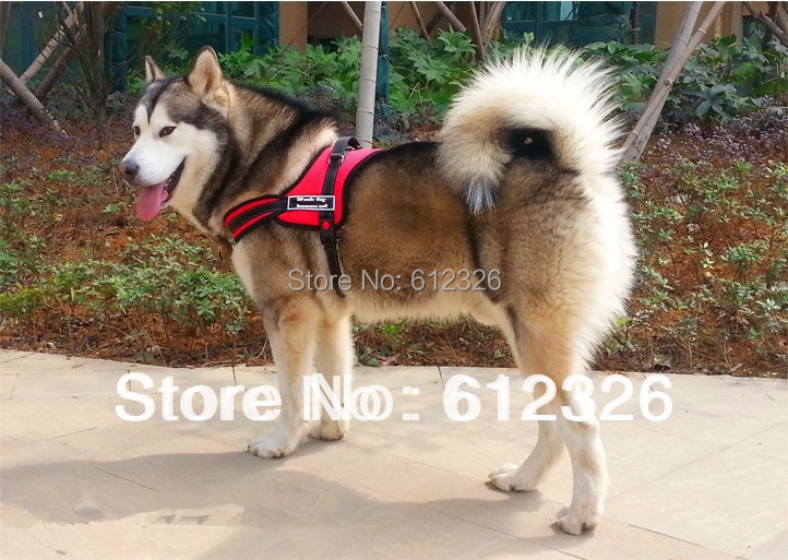 Free Shipping Dog Vest Cool Comfort Strap Dog Harness Velcro Dog