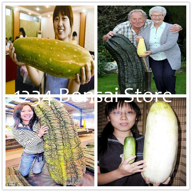 Zlking 100 Pcs Long Shape Cucumber Vegetable For Home No Gmo Vegetables For Home Garden Planting Garden Pots & Planters
