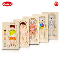 Onshine Wooden Multi Layer Puzzle Toys Boys Girls Body Structure Children Kids Learning Cognition Toys