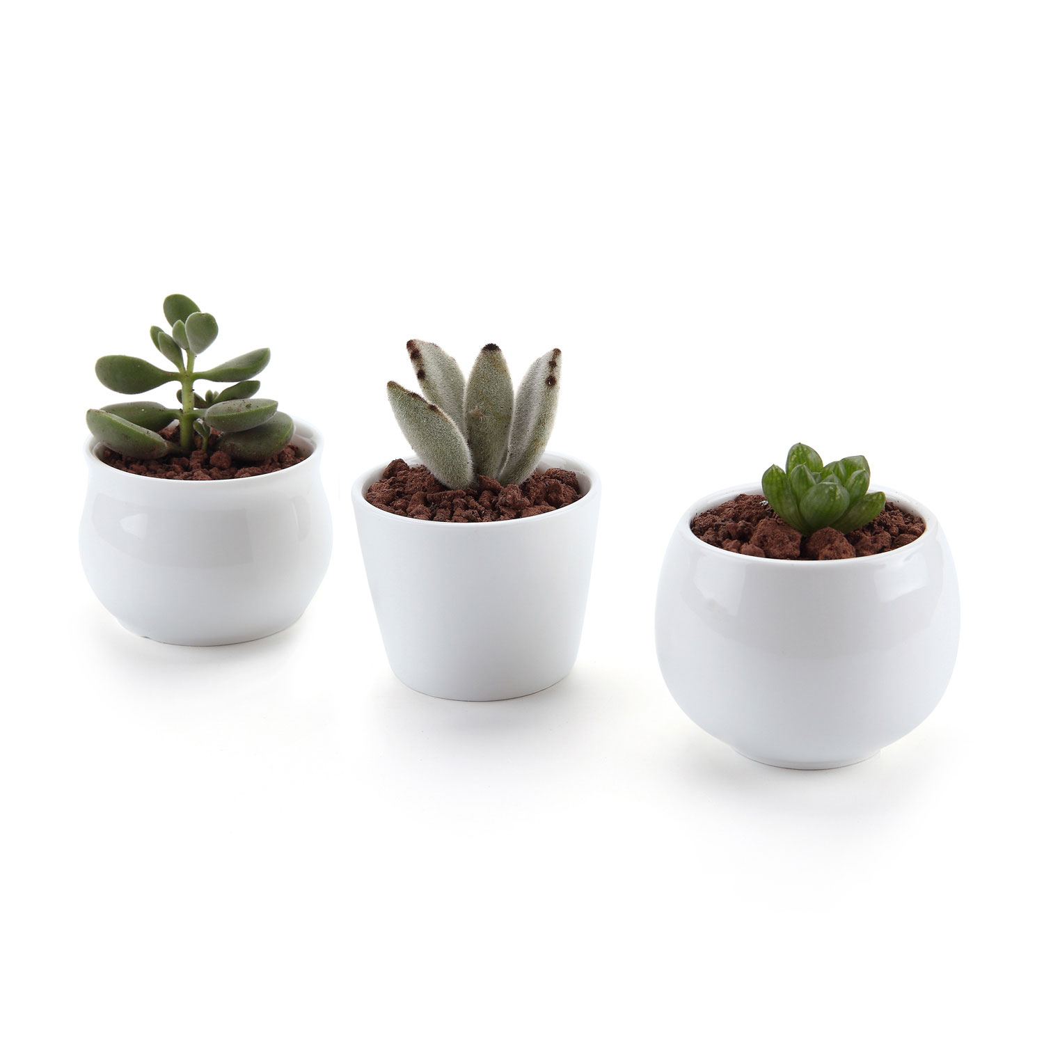 WITUSE White Square Garden Flower Plant Pot Mini Ceramic Bonsai Pots ...