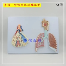 human respiratory system Relief model  Alveolar, lung and bronchus, mouth, nose and throat free shopping lobule and alveolus of lung model lobule moedl and alveolus model