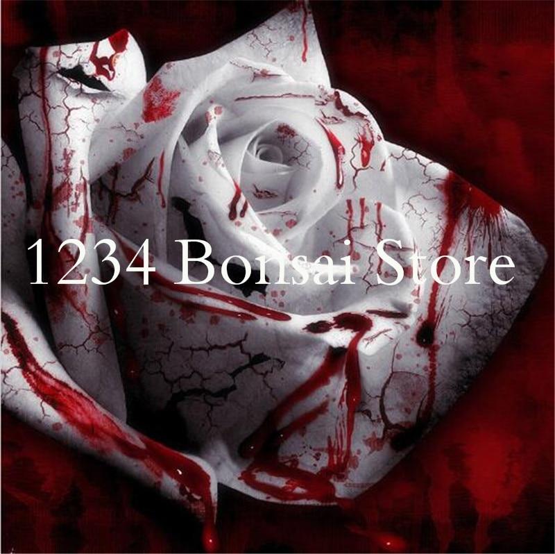 300 шт. редкий белый крови Роуз завод цветочных растений бонсай цветник Асака Редкие True Blood Rose для дома сад