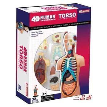 child scienceToy Human Anatomy model Human torso Assembly Model  Visceral Anatomical Model