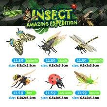 6 шт. Оригинальные дикие животные, животные, бабочки, стрекоза, насекомые, пчела, божья коровка, серия Cicada, модель игрушки для детей, подарок