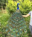 Большой 120 см Красивые перья Павлин птица МОДЕЛЬ пены и перья павлин ручной работы, для дома и сада украшения подарок a2577