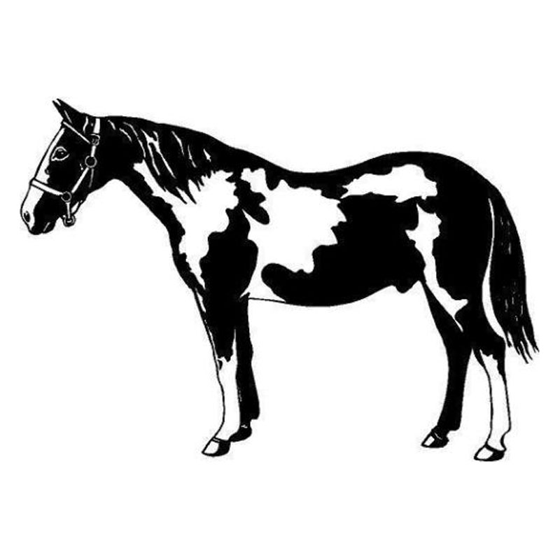Pinto Horse Coloring Pages: Aliexpress.com : Buy 16.5*11.7CM Pinto Horse Fashion Vinyl