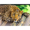 DIY Frameless Pictures DIY Painting By Numbers Leopard Animals Oil Painting On Canvas Home Decoration Wall