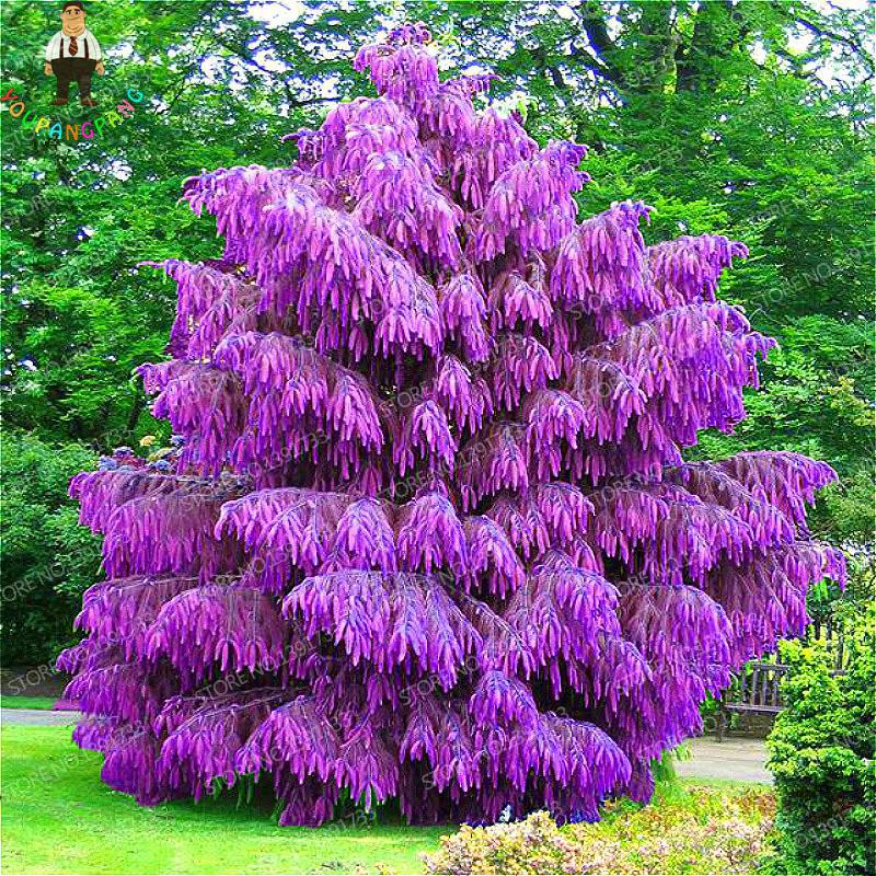 Popular evergreen plants buy cheap evergreen plants lots for Jardin chinois miniature
