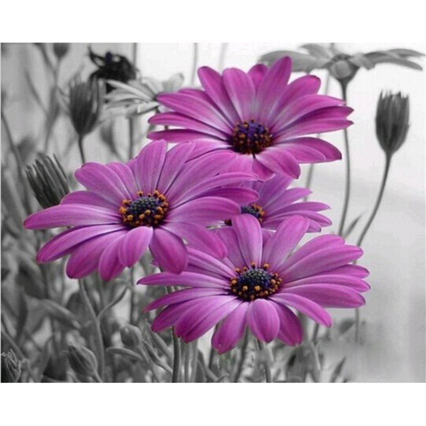 DIY Digital Painting By Numbers Package Purple African Daisy oil painting mural Kits Coloring Wall Art Picture Gift frameless
