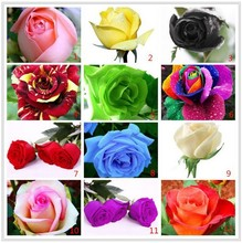 12 Kinds Of 100 Seeds, Rainbow rose seeds Beautiful rose seed Bonsai plants Seeds for home & garden 49%