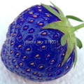 Hot selling 100pcs/bag blue strawberry rare fruit vegetable seed bonsai plant home garden free shipping