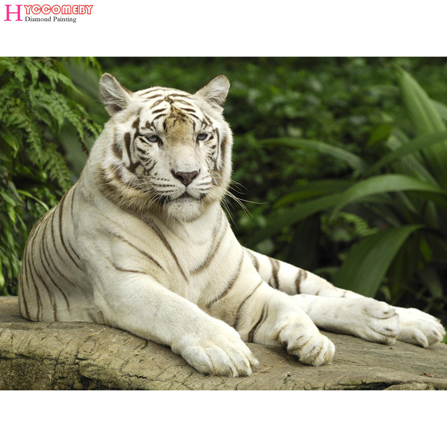 wallpaperswidecom animals hd desktop wallpapers for 4k - HD 1600×1200