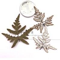 Silver Fern Back Specimens DIY Handmade Material Dried Flower 1 Lot 100pcs Press Flower Free Shipment