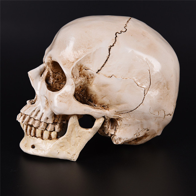 Resin Replica Medical Model Lifesize 1:1 Halloween Home Decoration High Quality Decorative Craft Skull 6