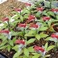 Новый стиль  100 шт.  прочные пластиковые зажимы для прививки  садовые растительные цветы  томатные лозы  растения