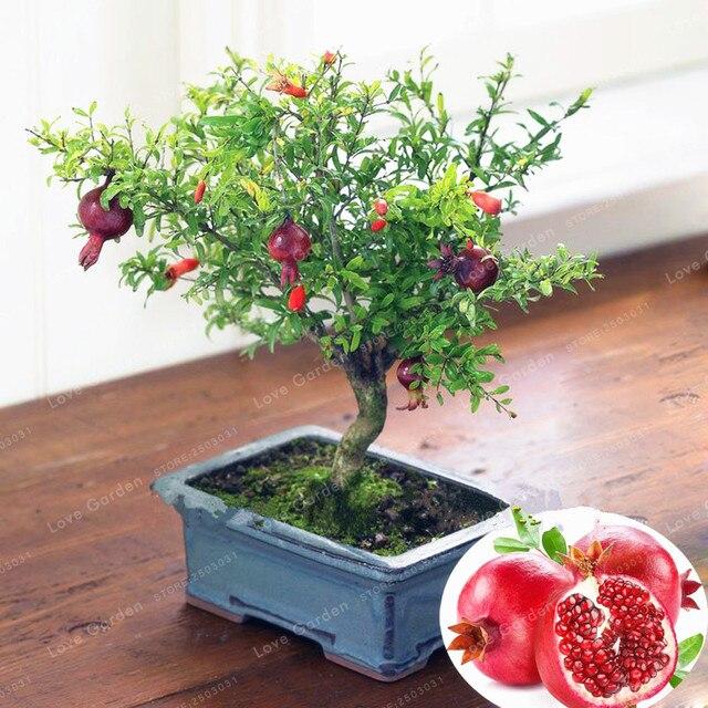 20 قطعة/الحقيبة بونساي الرمان بونساي حلوة جدا لذيذ الفاكهة بونساي العصارة شجرة بونساي النبات للمنزل حديقة وعاء