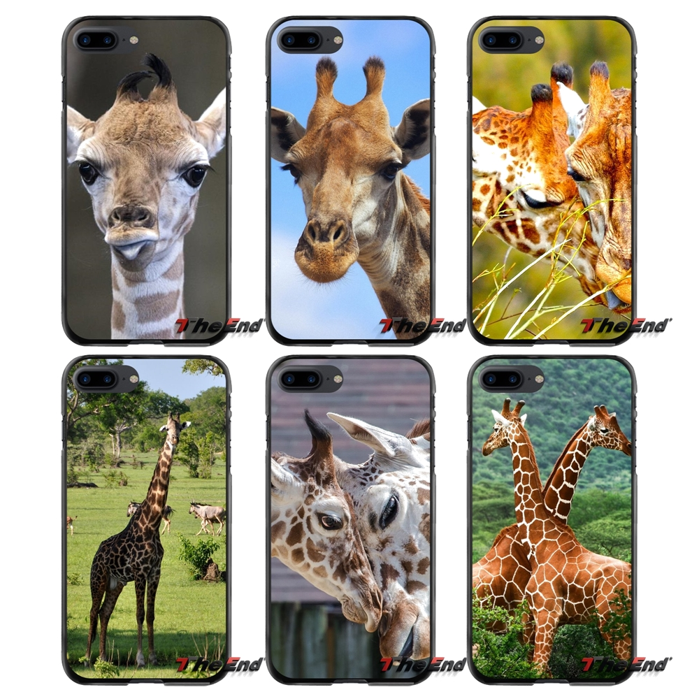 Giraffe Animal Accessories Phone Cases Covers For Apple iPhone 4 4S 5 5S 5C SE 6 6S 7 8 Plus X iPod Touch 4 5 6