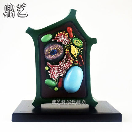 Plant Cell Model Biological Teaching Instrument Teaching Aids Free Shipping