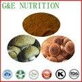 100% Natural Extrato de Cogumelo Shitake Orgânico