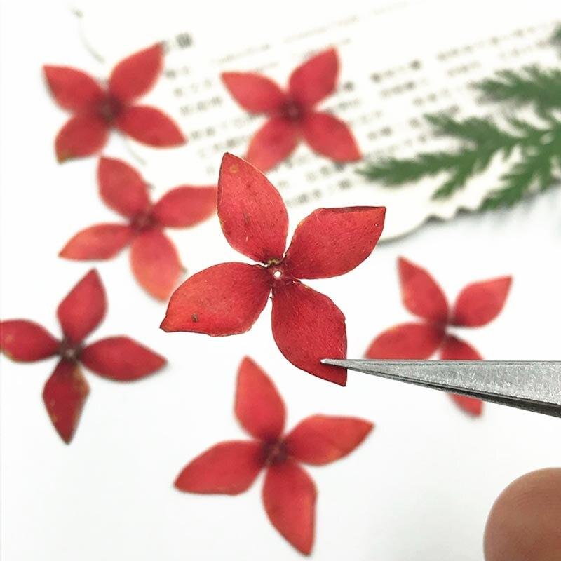 2018 последний оригинальный красный Иксора сушат засушенный цветок Бумага Книги по искусству подарки для Почтовые открытки украшения 200 шт. Б...