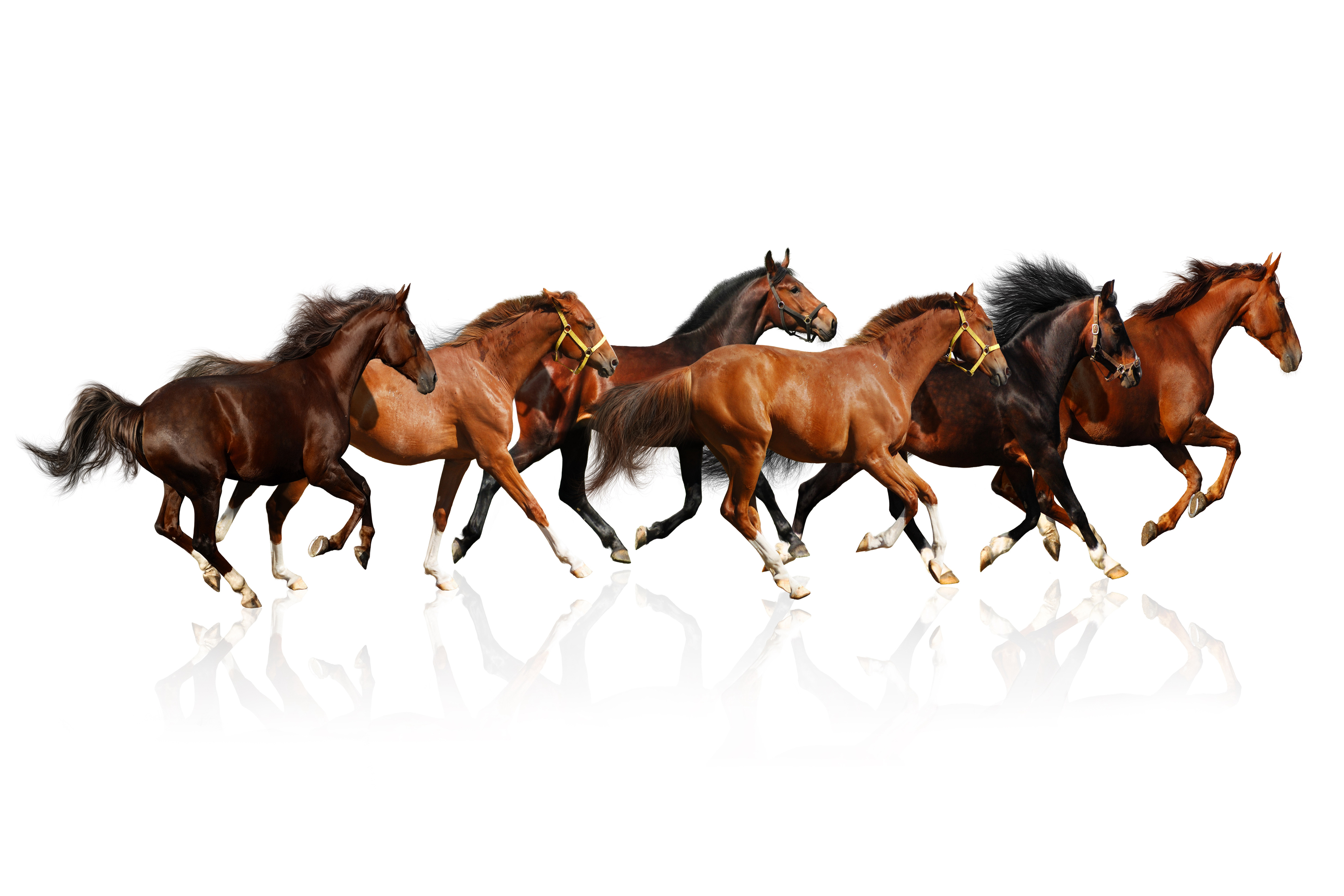 Home Decor Discount Stores Home Decoration Horses Brown White Background The Herd