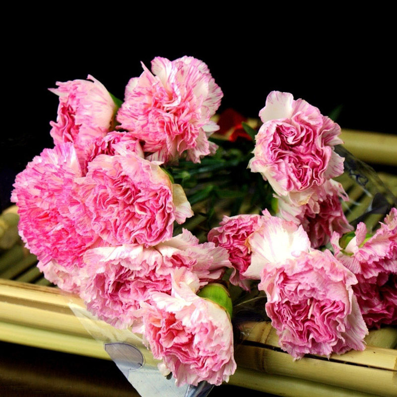 aliexpresscom buy hot selling 16 colors available carnation seeds perennial flowers potted garden plants dianthus caryophyllus flower seed 300 pcs from - Carnation Flower Colors