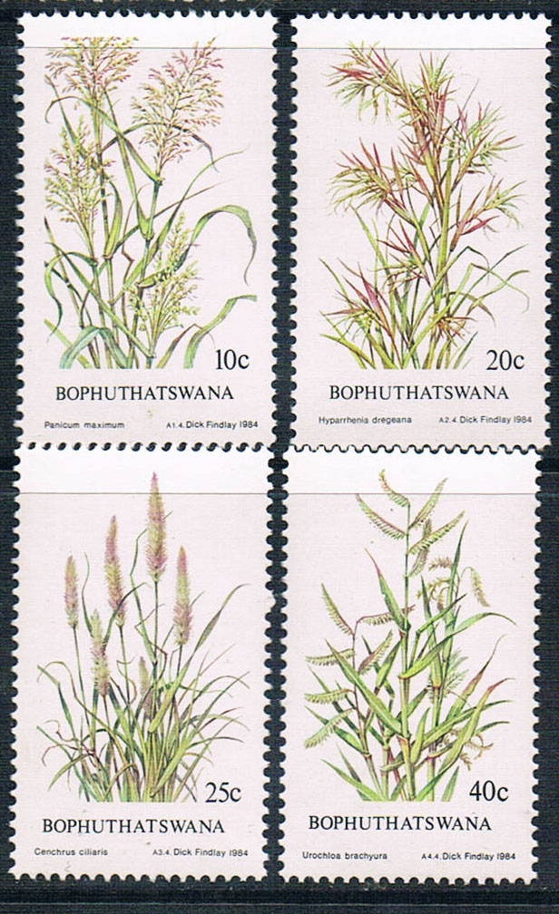 NF0117 1984 4 0616 new forage Bophuthatswana nf samural