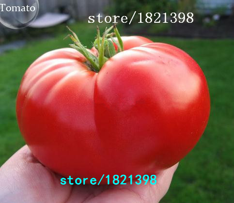 20Rare Beefsteak Tomato Seeds DIY Vegetable Free Shipping