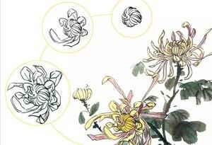 Image 3 - 128 pages Traditionele Chinese Schilderen Boek Voor Pruim bloesems, orchidee, bamboe en chrysant Borstel Schilderen libros 28.5X21 cm