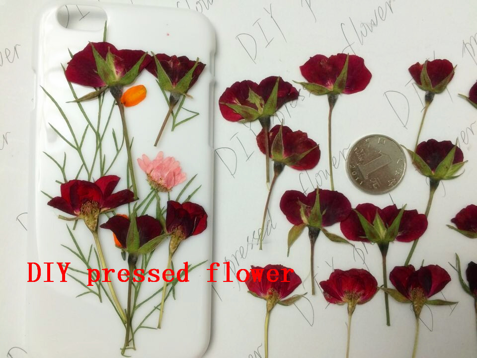 Free shipment pressed flower dried flower primary color rose bud free shipment pressed flower dried flower primary color rose bud side pressure with sticks half sale 1 lot10 bags in artificial dried flowers from home mightylinksfo Image collections