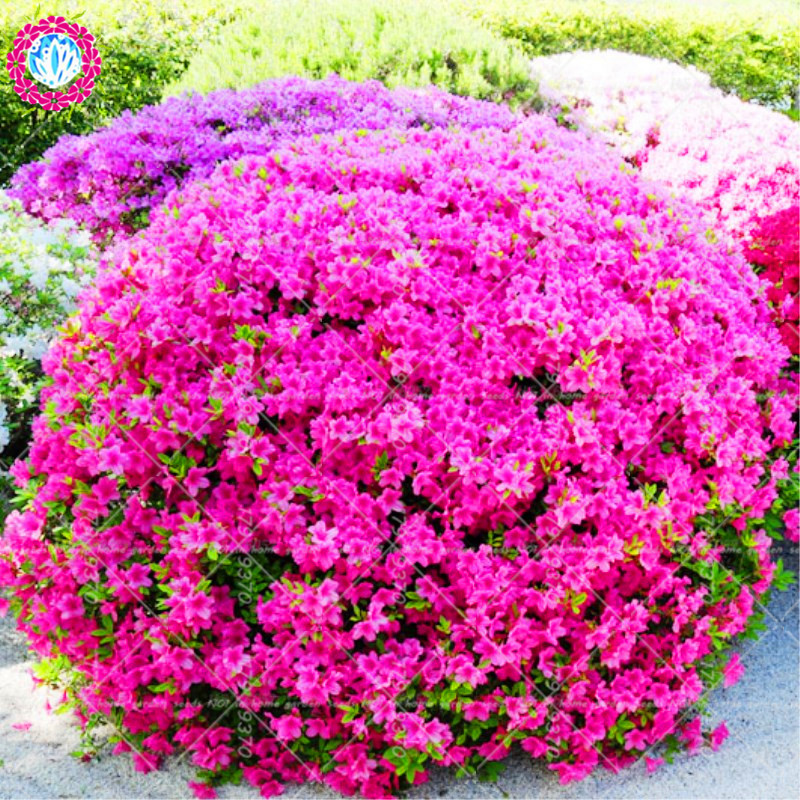 spring wedding flowers chwv.htm best dracaena near me and get free shipping m3bkn9m3  best dracaena near me and get free