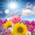 Sol flor impresa primavera recién nacido foto telones de fondo de tela telón de fondo de estudio fotografía niños fondos de Arte D-9816