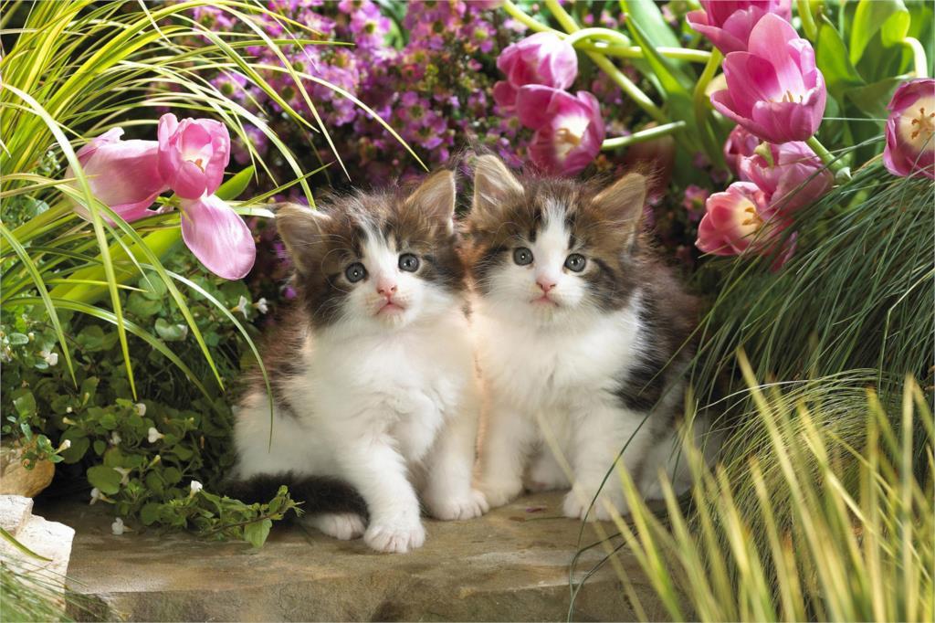 ̿̿̿(•̪ )DIY frame Cute Cat Baby animal posters and prints home decor ...