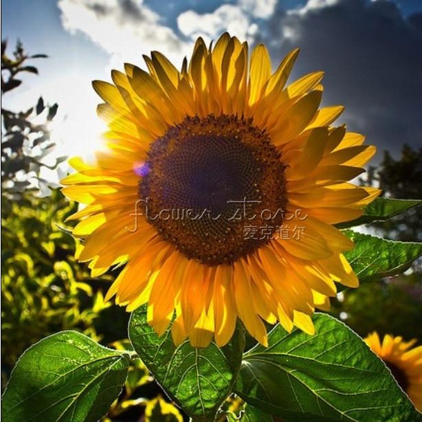 Finest Sunflower Garden Decor – Home design and Decorating AI88